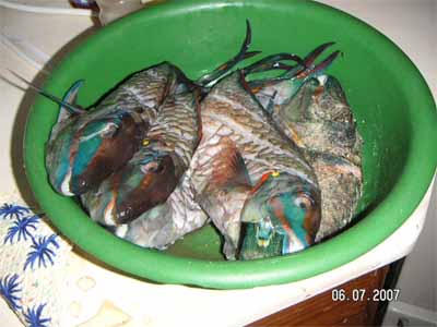 Marinierter Fisch Rezept Dominikanische Republik