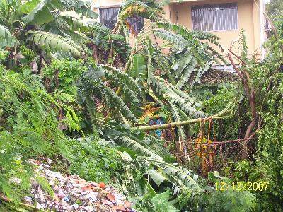 Abgebrochene Bäume nach Tropenstrum Olga