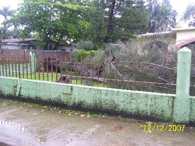 Sturm Olga umgestürzte Bäume