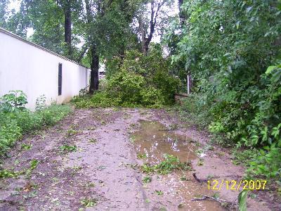 Sturm Olga 2007 Bäume auf der Straße