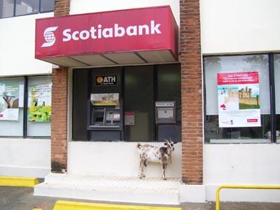 Scotiabank Sosua
